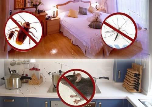 Универсальный ультразвуковой отпугиватель крыс, мышей и насекомых LS-927: преимущества: